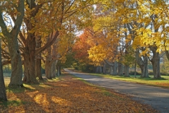 j_countrylaneinfallcolornewburymassachusetts_full